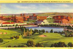 UCLA postcard  Wow, missing a few homes...