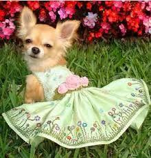 vestido de cachorra - Pesquisa Google