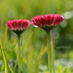 sebastiano secondi photography: flora