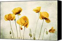 http://fineartamerica.com/featured/yellow-poppy-photography-yellow-poppies-yellow-flowers-olive-green-yellow-floral-wall-art-amy-tyler.html