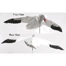 Canada Goose jackets outlet price - 1000+ ideas about Snow Goose Decoys on Pinterest | Duck Decoys ...