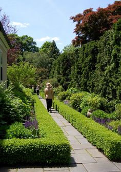 This Boxwood hedge in Princeton, New Jersey highlights and defines the random pattern Bluestone walkway and also provides the border for a perennial garden.