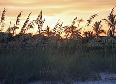 Beach Grass at Sunset