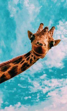 Giraffe وت - gif nice Giraffe وت - gif Giraffe niedlich 🌸 – # Fondodepantallaparateléfonos Source by Sitedetailleplus Cute Wallpaper Backgrounds, Animal Wallpaper, Cute Wallpapers, Flamingo Wallpaper, Iphone Wallpaper Glitter, Blog Backgrounds, Funny Iphone Wallpaper, Disney Phone Wallpaper, Wallpaper Lockscreen