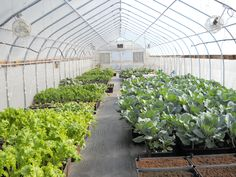 Rimol Greenhouse Systems manufactures complete commercial hydroponic greenhouses for growing