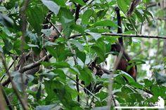 La National Geographic cataloga al Parque Corcovado y sus alrededores como la región con mayor biodiversidad del mundo y realmente lo es, ni bien bajamos de la lancha los monos titi muy curiosos vinieron a saludarnos.