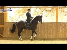 Classical Dressage Vol. 1: School of Aids, Philippe Karl, DVD Horse Training - YouTube