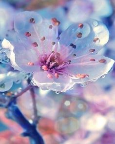 Image via We Heart It #flower #me #petal #rain #spring #tear