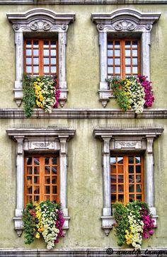 Вариант штукатурного дома в классическом стиле с растениями