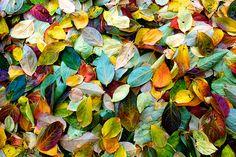 flower petals or leaves :)
