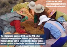 The relationship between CITES and the WTO offers a valuable example of how different global governance frameworks can work in concert to help deliver on the world's common aspiration for sustainable development.  ‪#‎WTO‬  ‪#‎CITES‬
