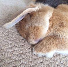 Bunny nap time