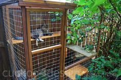 Cuckoo for my cats! Outdoor cat enclosure - this wire