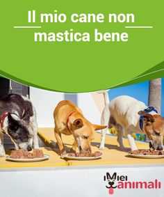 Il mio cane non mastica bene   Conoscere a fondo le #ragioni alla base dei loro #atteggiamenti è fondamentale per capire i nostri #animali. Ecco spiegato #perché il cane non mastica il cibo. #Alimentazione