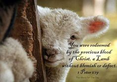 1 Peter 1:19.  We are redeemed by the precious blood of Christ. a Lamb without blemish or defect.