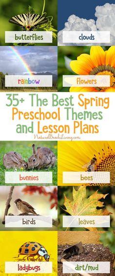 The Best Spring Preschool Themes and Lesson Plans, Free Printable, Life cycles, Flower activities, Farm, Preschool books, Pond Theme, Animal habitats