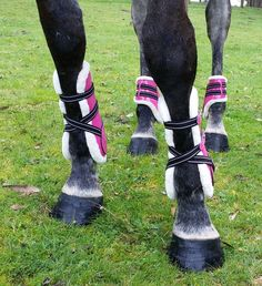 Our Patent Tendon Boots are the perfect touch to add some colour to your ponies/horses show jumping attire and jump in style. These tendon boots are lined with minkfur and stand out making sure each leg is protected in STYLE. These boots are prefect for protecting your ponies/horses legs without their coordination being affected. Tendon boots support the tendons and Tendon Bootsligaments in a horses lower foreleg but are still open fronted allowing the horse to feel any contact with poles.