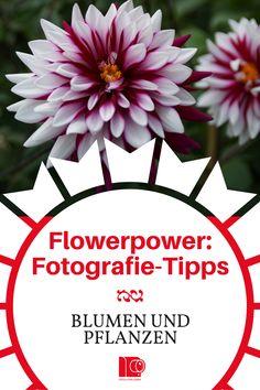 Blumen - Pflanzen - Natur. Tolle Tipps für die Blumenfotografie! Pflanzen optimal ablichten und Farben dynamisch festhalten. Ratgeber für Pflanzen-Fotografie: http://www.fotos-fuers-leben.ch/fotokurs/naturfotografie/tipps-naturfotografie-pflanzen-blumen/