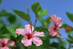沖縄全島エイサーまつりに便利なホテル&パッケージツアー | たびらい