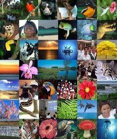 Mundo: ¿Qué es la Biodiversidad y cual es su importancia para el desarrollo de los pueblos originarios del mundo y de Chile?