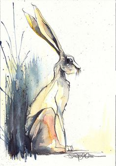 back by Jennifer Kraska watercolor jd Hare Illustration, Watercolor Illustration, Watercolor Paintings, Illustrations, Watercolours, Animal Paintings, Animal Drawings, Art Drawings, Hare Pictures