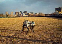 Boston Dynamics' BigDog robot. The uncanny, human inhumanity of Boston Dynamics' androids.