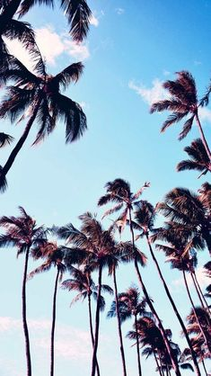 This is the perfect summer wallpaper to remind you of the summer fun awaiting you. please come faster summer. Palm Tree Iphone Wallpaper, Summer Wallpaper, Travel Wallpaper, Wallpaper Ipod, Palm Trees Tumblr, Phone Backgrounds, Summer Backgrounds, Cute Wallpapers, Wallpaper Wallpapers