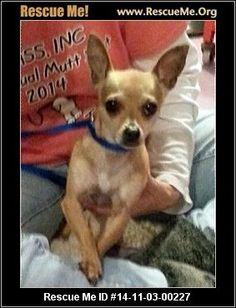 - Wetzel County Animal Shelter - New Martinsville, WV Rescue Animals