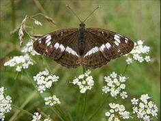 (1) Ponha aqui o seu pezinho - YouTube Photo Images, Beautiful Butterflies, Nature Pictures, Butterfly, Musica Popular, Lisbon Portugal, Beetles, Jehovah, Dragonflies