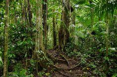 Amazonien, Yasuni, Pfad, Dschungel, Urwald - jetzt bestellen auf kunst-fuer-alle.de