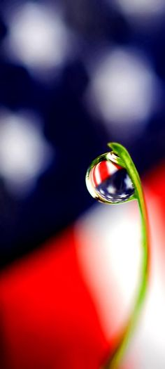 Red White And Blue - America - Grass - Dew - Macro photography