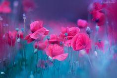 Blue Garden Poppies Canvas Print / Canvas Art by Magda Bognar Canvas Art, Canvas Prints, Art Prints, Red Home Decor, Thing 1, Blue Garden, Summer Memories, Modern Pillows, Red Poppies