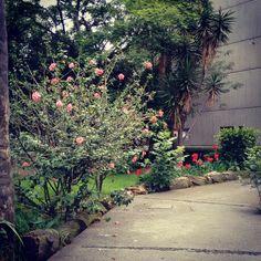Flores en CU