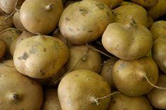 Growing Jicama