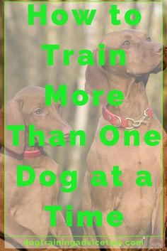 Dog training tips - Train Your Pooch By Following This Advice. >>> Learn more by visiting the image link. #DogTrainingTips via @KaufmannsPuppy #DogsTraining