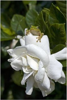The princess kissed the frog and … instantly turned into a flower!
