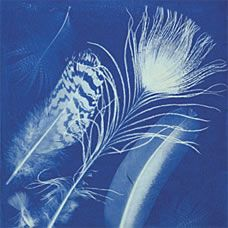 More Anna Atkins, a cyanotype of feathers. #cyanotype #feathers #earlyphotography