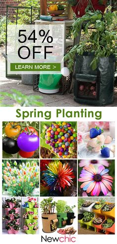Spring planting. Regrow Vegetables, Garden Of Eden, Garden Art, Home And Garden, Garden Ideas, Spring Plants, Trees To Plant, House Plants, Container Gardening