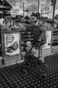 Doggie in the Window Not For Sale Reservior Australia  June 2014