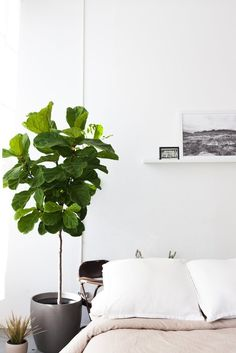 House Tour: A Sunny and Minimal One-Room East Bay Loft   Apartment Therapy