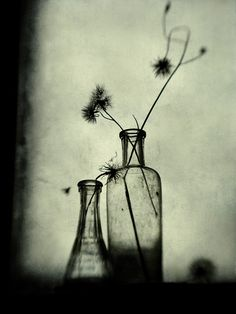 Photography, Digital in Object, Still life - Image #380482