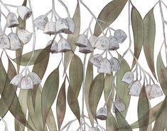 Australian Native Flora on Behance