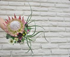 King Protea and succulents bridal bouquet. Photo courtesy of W. Blue Succulents, Hanging Succulents, Succulent Centerpieces, Succulent Bouquet, Protea Wedding, Flower Bouquet Wedding, Flower Studio, Bride Bouquets, Air Plants
