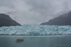 Team Wiking | Alaskan Cruise Day 7 / Glacier Bay National Park | http://www.teamwiking.com