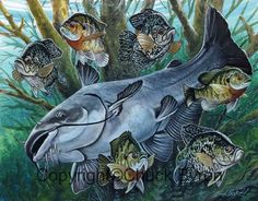Panfish and Blue Catfish painting