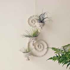 Air plant decor. Macrame wall decor. I wish I could learn to make this.   Maybe it will go on sale...