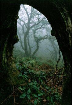 Woodland, Cabilla Tor, Bodmin Moor, Cornwall, Inglaterra vía timsuzi
