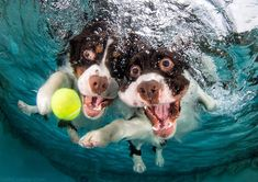 underwater photos of dogs fetching their balls by seth casteel (8)