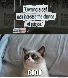 owning-a-cat-may-increase-your-chance-for-suicide