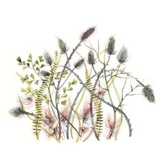 Thistles print of original watercolor ($22) ❤ liked on Polyvore featuring home, home decor, wall art, matte painting, water color painting, water colour painting, landscape wall art and watercolour painting